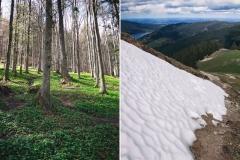 Durch einen Märchenwald und letzte Schneefelder rauf bis zum Gipfel der Baumgartenschneid.