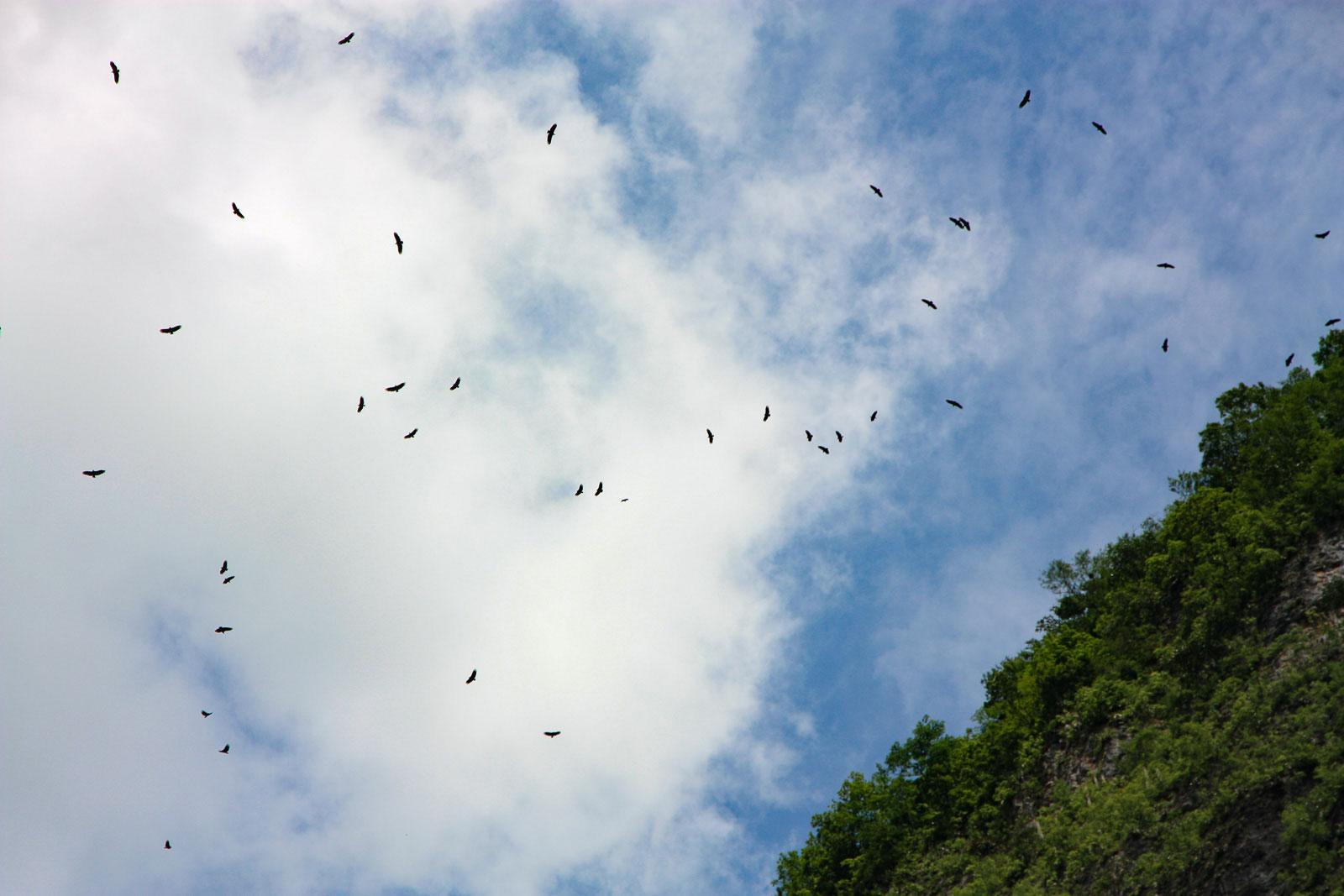 Vögel kreisen über dem Cañón del Sumidero.
