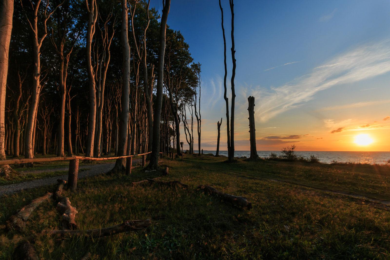 Zum Sonnenuntergang fängt der Wald richtig an zu leuchten.