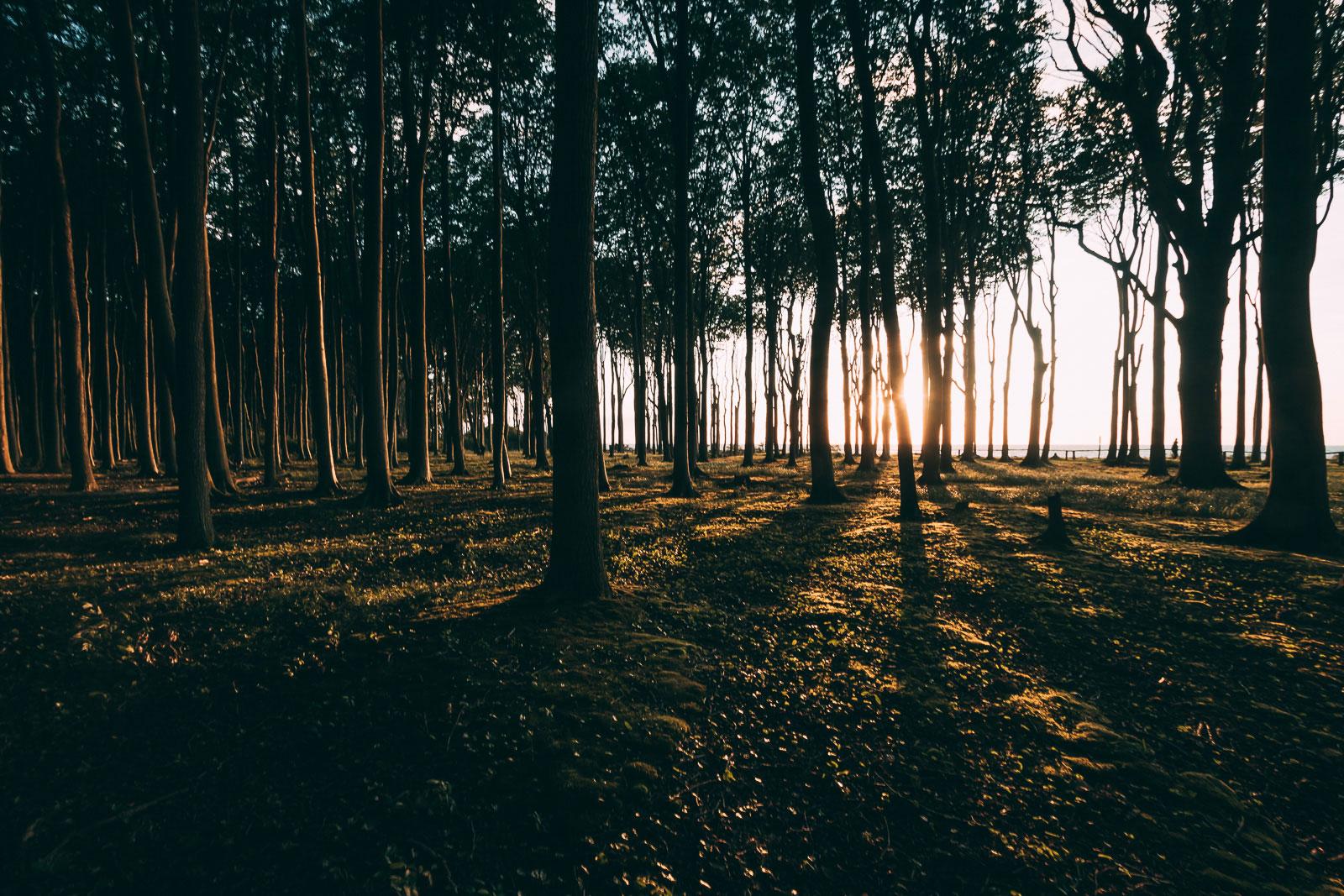 Vielleicht sollte man den Gespensterwald doch eher Zauberwald nennen?
