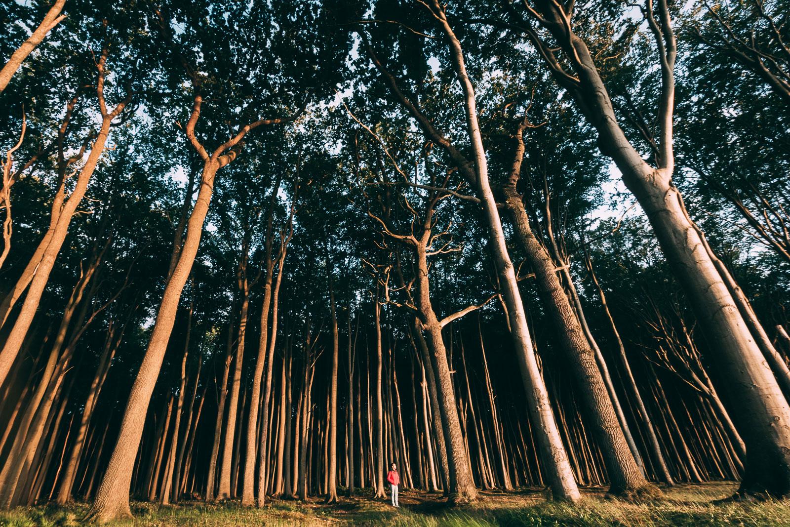 Beeindruckende Kulisse. Hier sieht man wohl am besten woher der Gespensterwald seinen Namen hat.