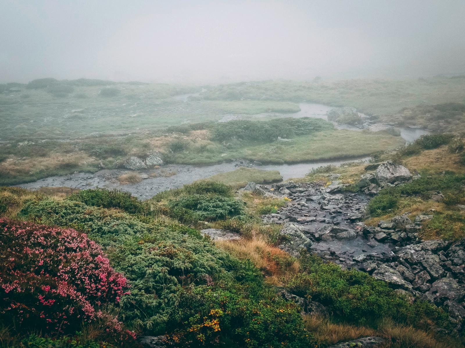 Farbtupfen im Nebel ...