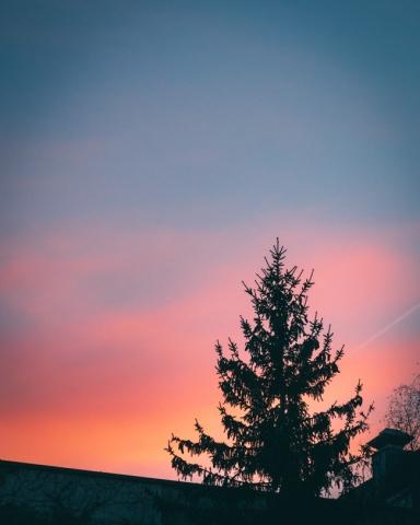 Sonnenuntergang mit Silhouette einer Tanne