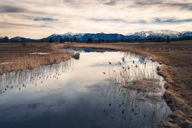 Moorwiesen am Staffelsee mit Blick auf die Alpen