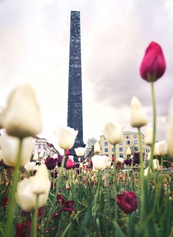 Karolinenplatz, München, Obelisk, Tulpen, Stadt, Bayern, Oberbayern, Deutschland
