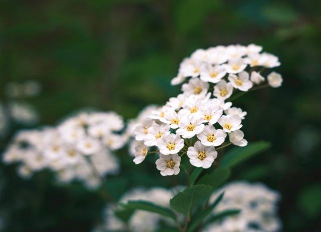 Blumen, Frühling, Blüten, blühen