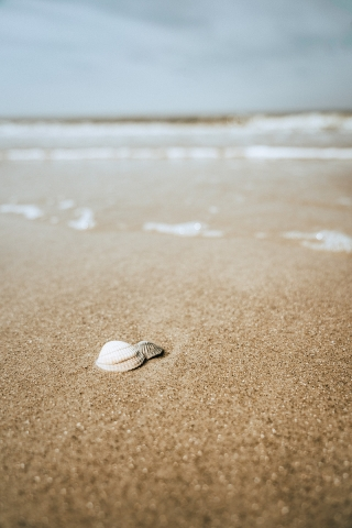 Strand, Muschel, Meer, Sand, St. Peter-Ording, Nordsee, Deutschland, Sommer