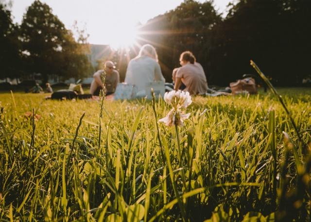 Picknick, Sommer, Freunde, Luitpoldparl, München, Deutschland, Bayern, Sonne, Gegenlicht
