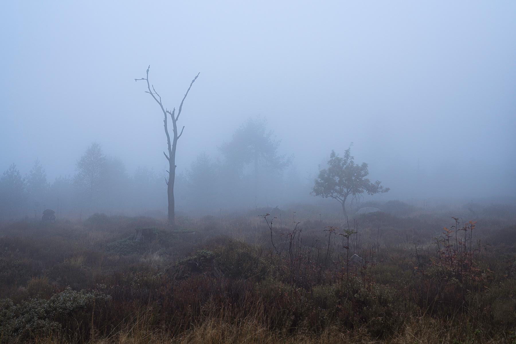 Nebel im Schwarzwald. Einzelne Silhouetten von Bäumen, die auf einer Anhöhe stehen.