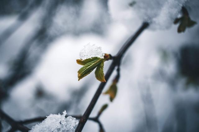 Ein Blatt mit kleiner Schneehaube