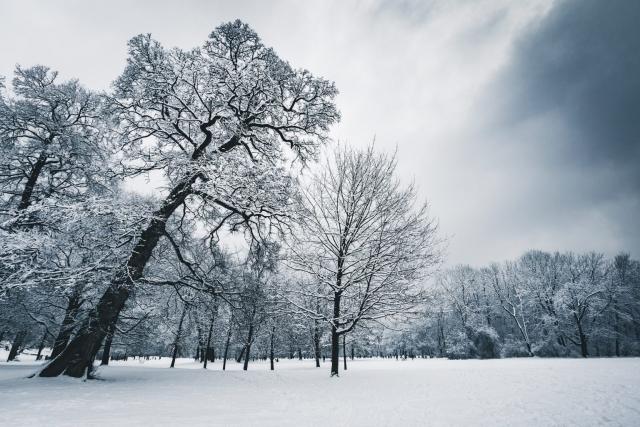 Englischer Garten, Winter, München,