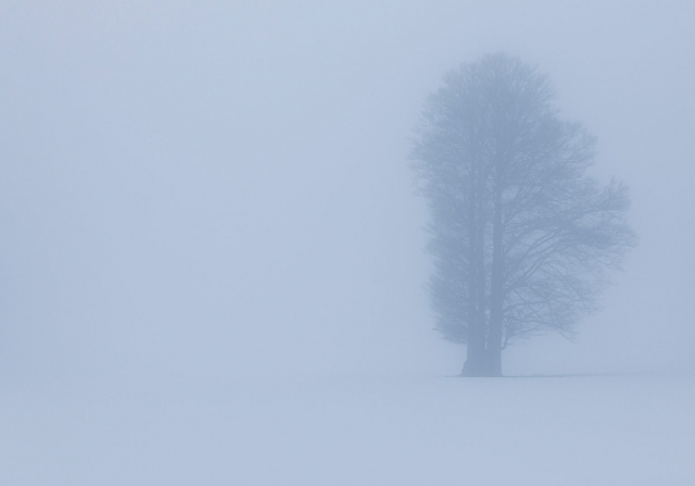Nebel, Schweiz, Jura, Silhouette
