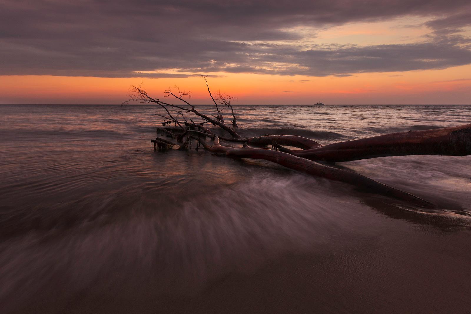 Ein ins Wasser ragender umgestürzter Baum beim Sonnenuntergang am Weststrand, Ostsee.