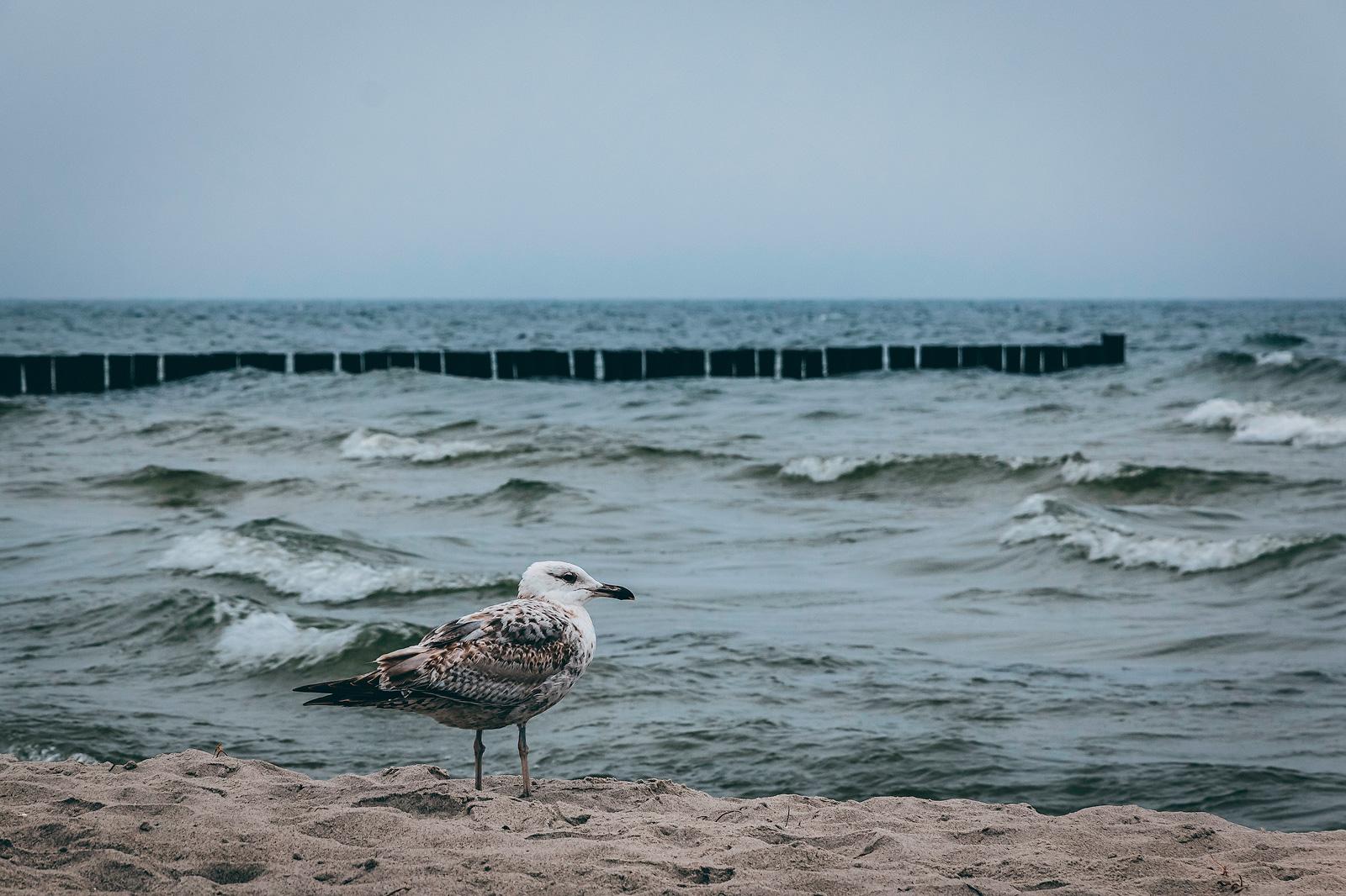 Eine Möwe am Strand von Zingst, Darß, Ostsee.