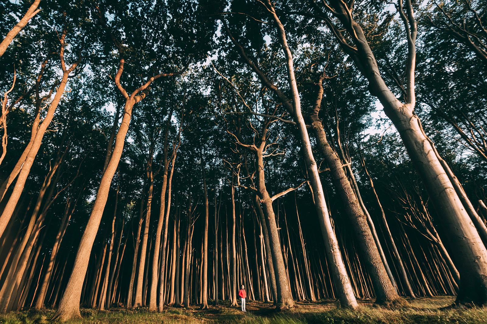 Fotospot Gespensterwald in Nienhage n an der Ostsee