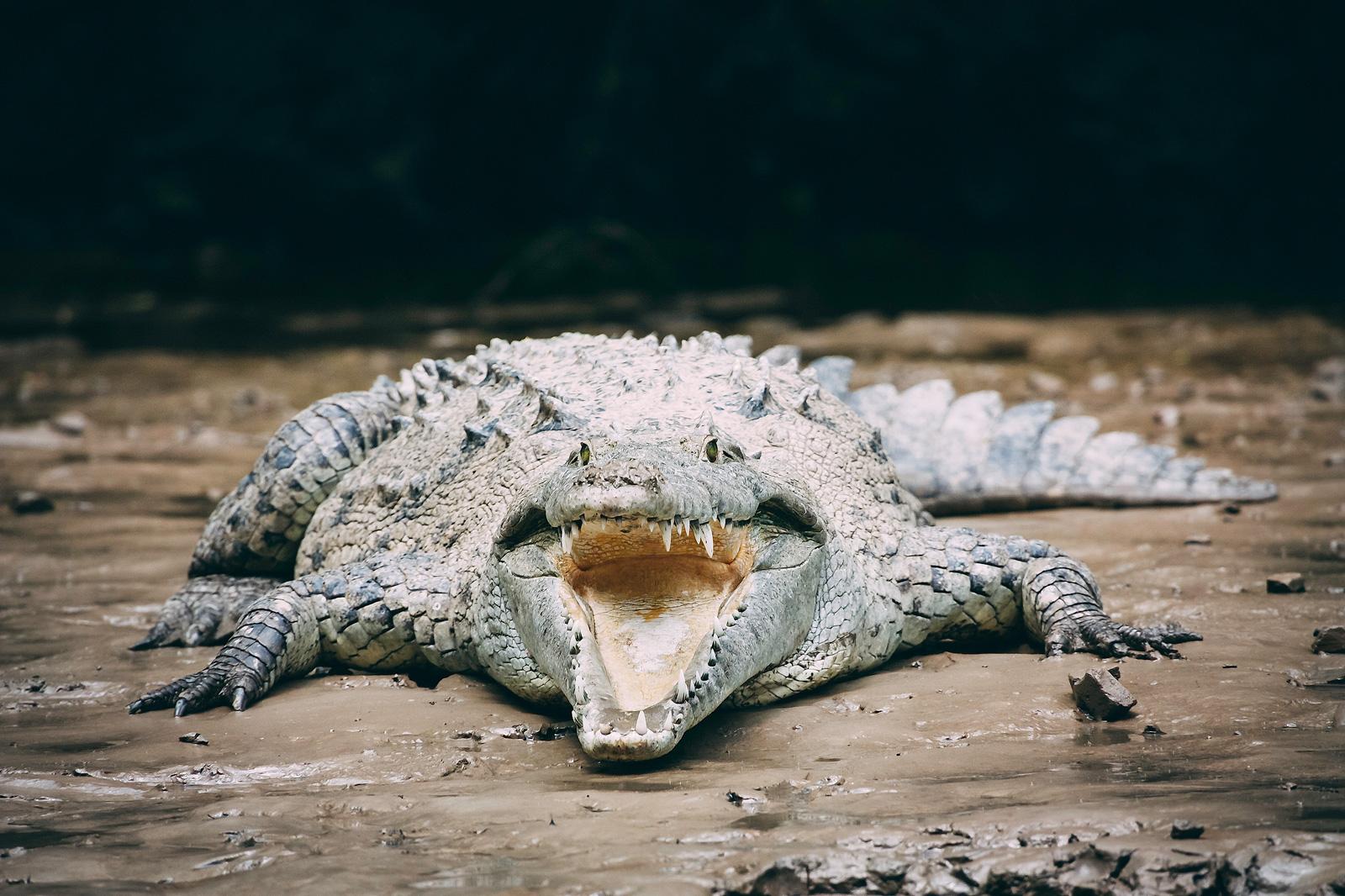 Fotospot Sumidero Canon, Mexiko, kathrinsworld, Kathrin's World, Cañón del Sumidero, Krokodil