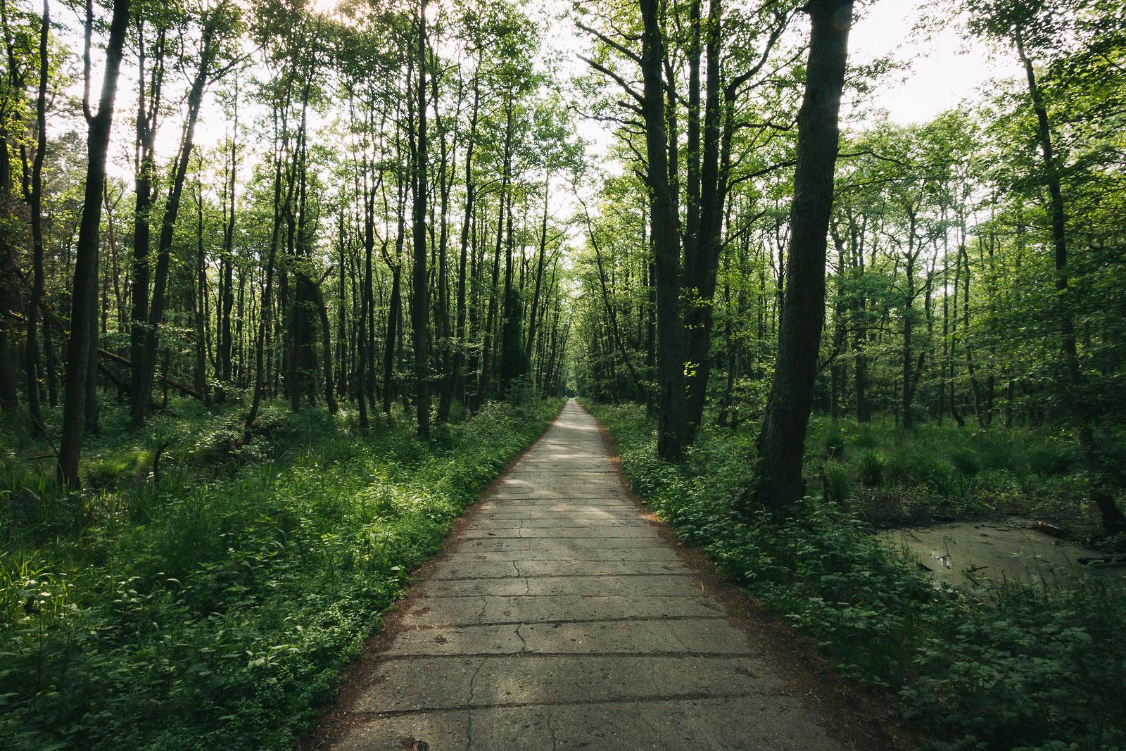 Der Darßwald im Nationalpark Vorpommersche Boddenlandschaft.