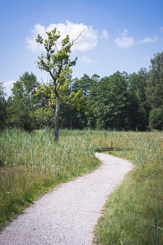 Wanderung durchs Naturschutzgebiet am Staffelsee