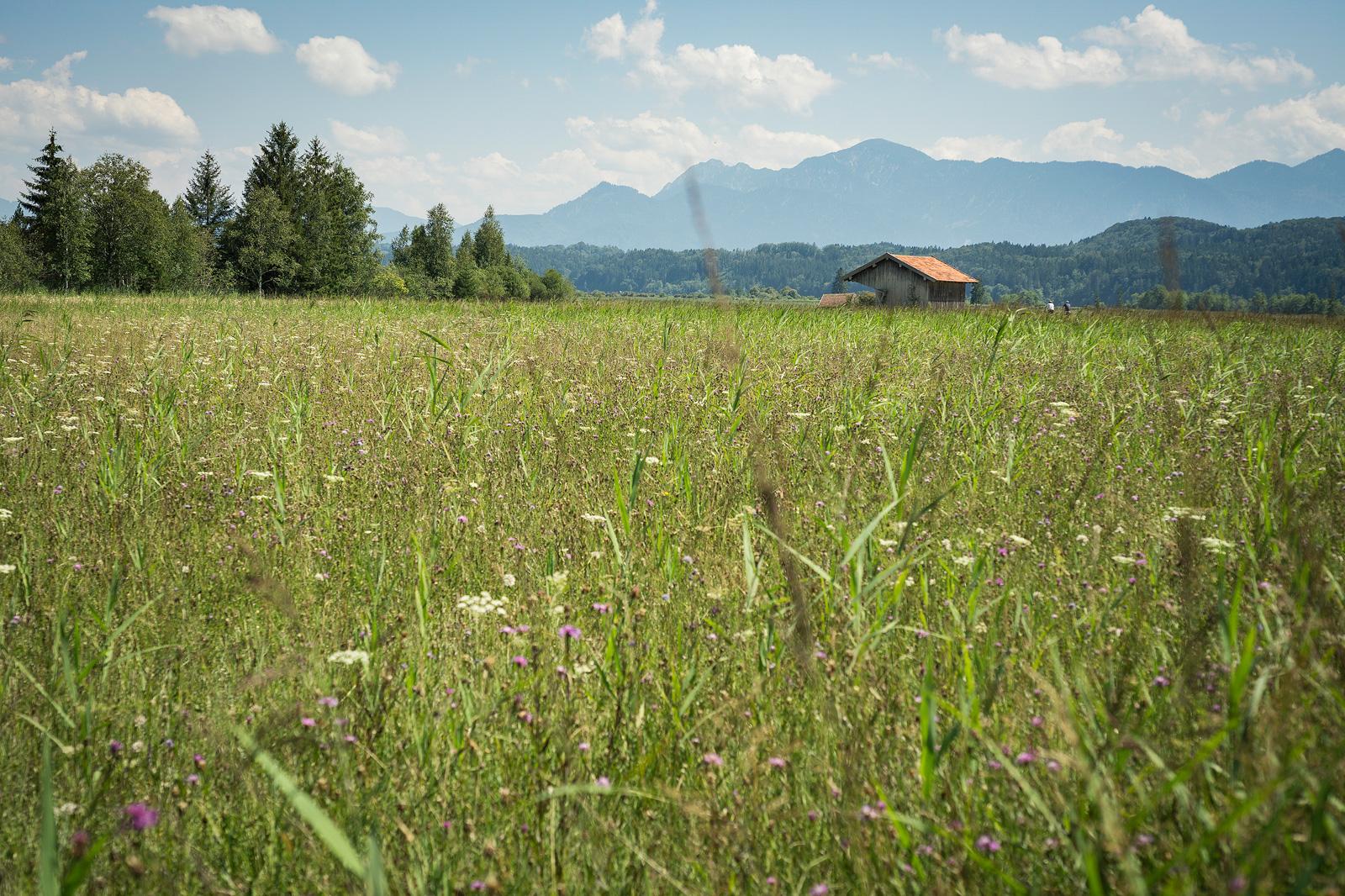 Wanderung von Uffing am Staffelsee nach Murnau