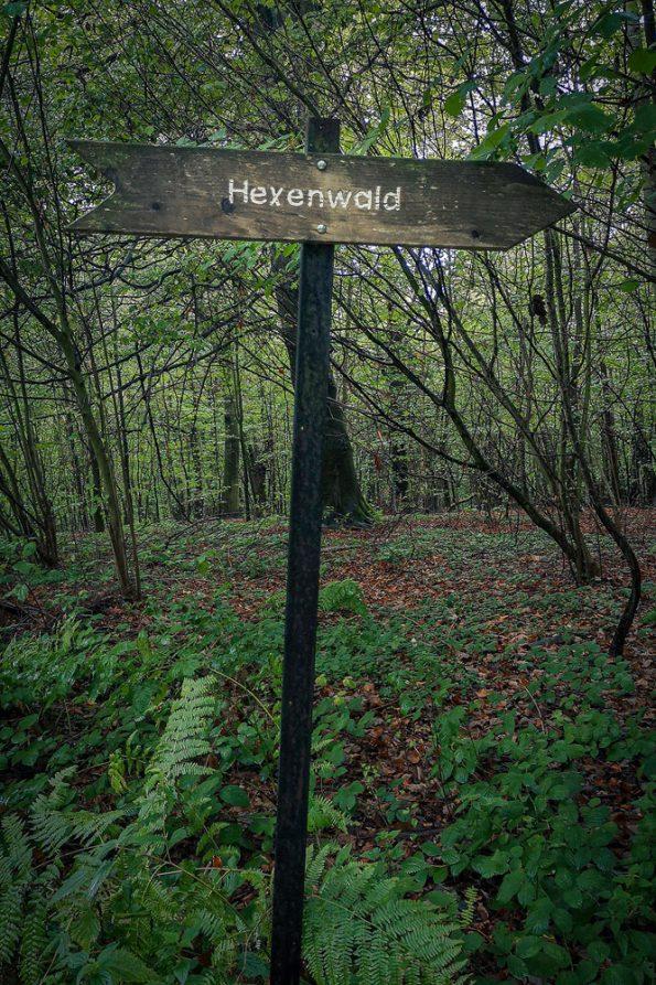 Hexenwald auf Rügen