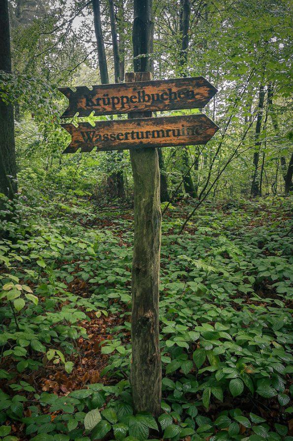 Krüppelbuchen und Wasserturmruine im Semperwald