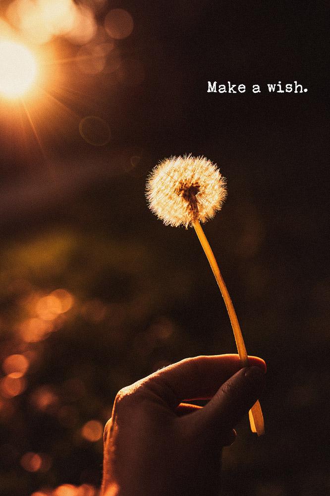 Pusteblume, Make a wish, wünsch dir was