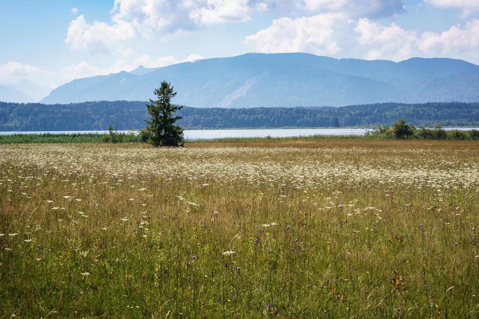 """Naturschutzgebiet """"Westlicher Staffelsee mit angrenzenden Mooren"""" mit Bergblick im Sommer"""