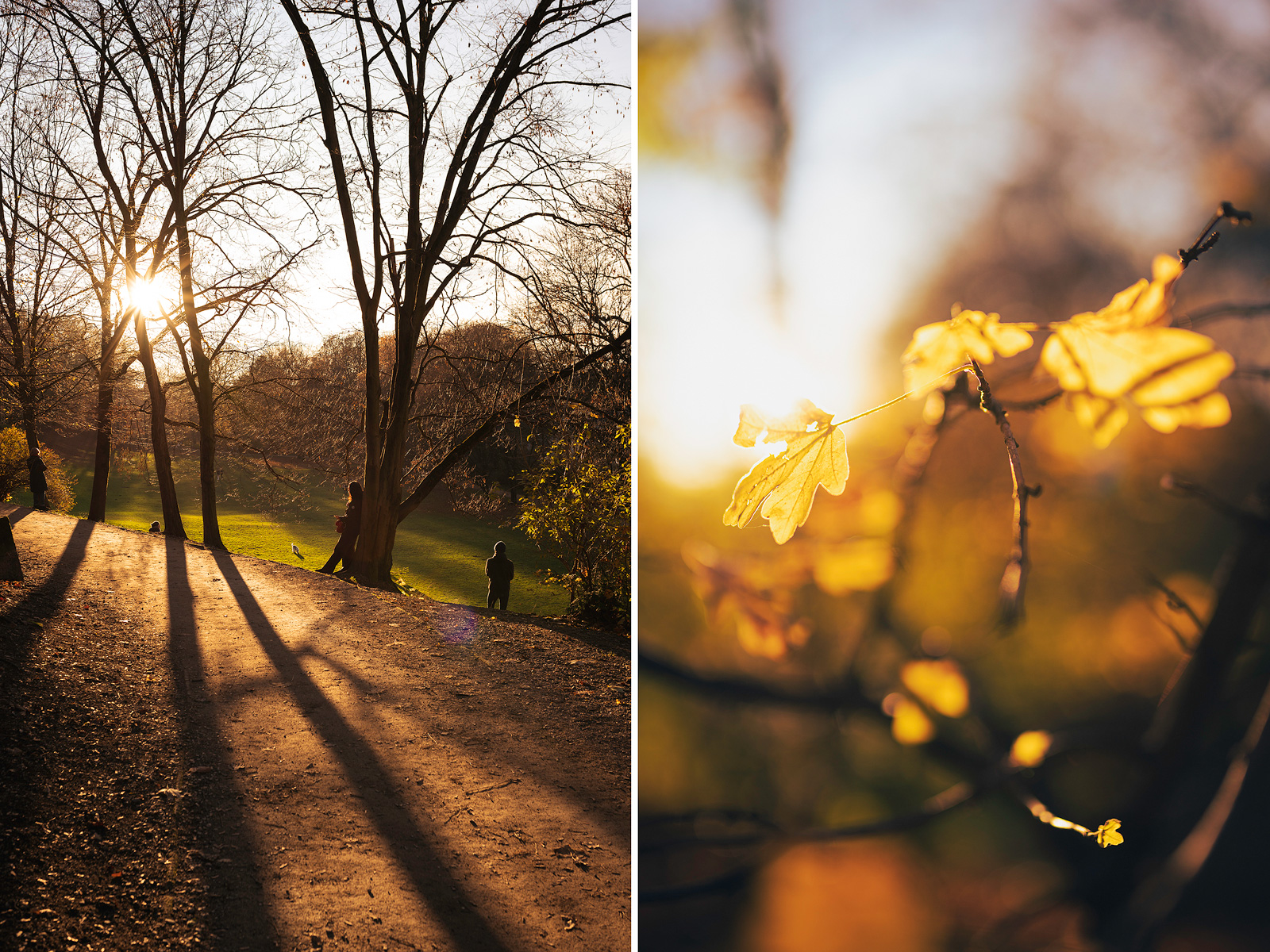Schlittenberg und goldener Herbst in München